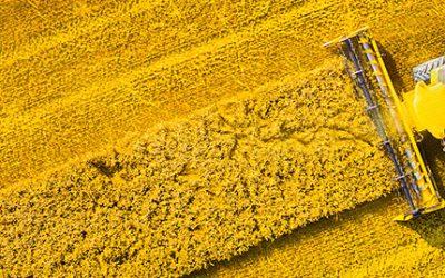 Exploring sustainable biofuel feedstock potential in Sub-Saharan Africa