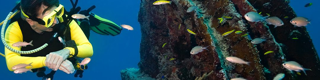 Artificial reefs breathe new life into ecosystems