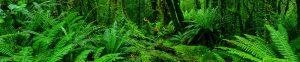 Shedding light on vegetation dynamics